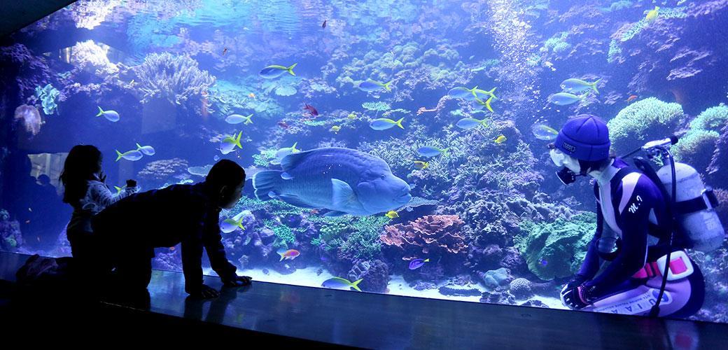 サンゴ大水槽