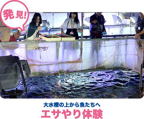 大水槽の上から魚たちへエサやり体験