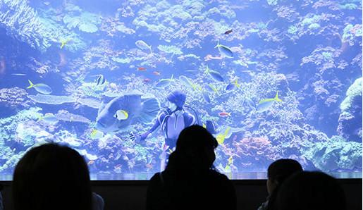 サンゴ大水槽での水中散歩