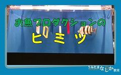 f1_img_1374284801_umitamanashika