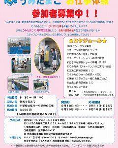 f1_img_1374753282_umitama_oshigoto