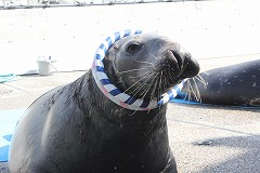 f1_img_1387335843_seal_up