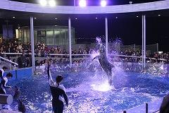 f1_img_1419582500_night_dolphin