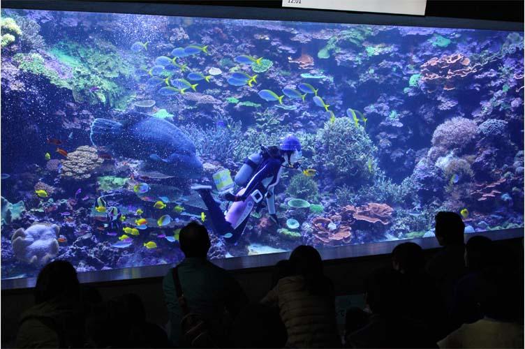 サンゴ水槽4