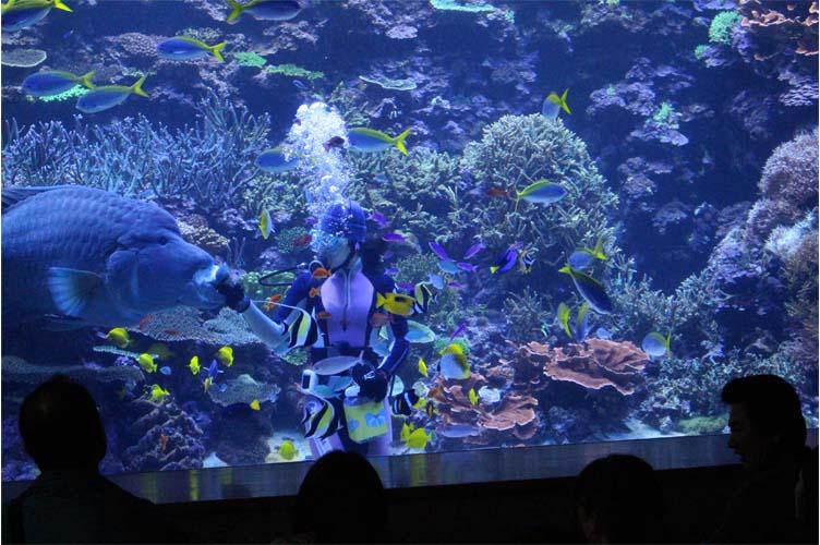 サンゴ水槽5