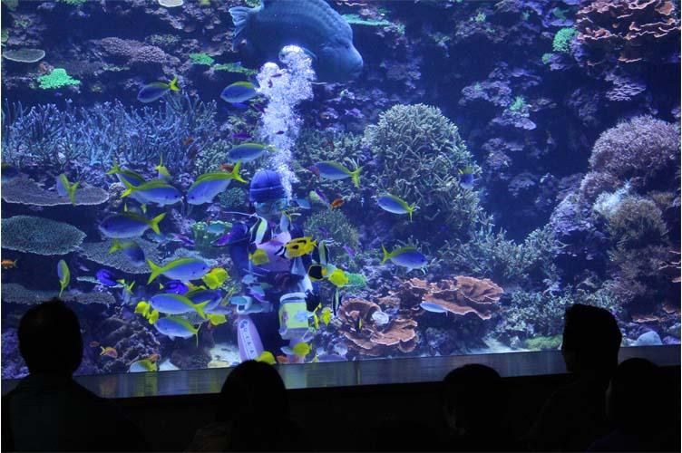 サンゴ水槽6