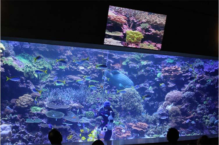サンゴ水槽7