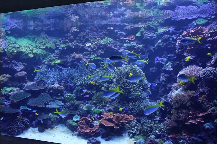 サンゴ水槽9