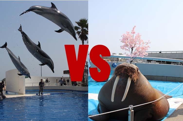 セイウチ対イルカ