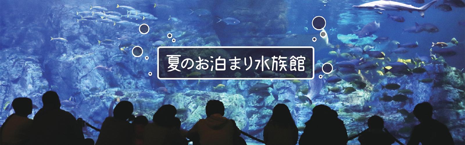 お泊り水族館
