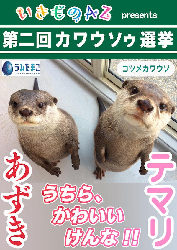 054_テマリ&あずき_うみたまご