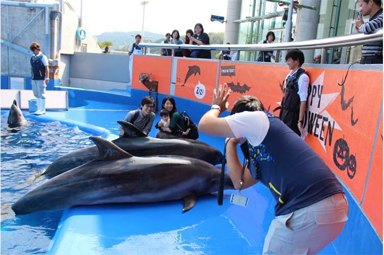 イルカとパチリ外1