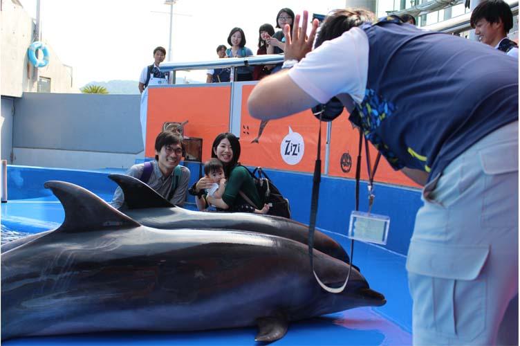 イルカとパチリ外2