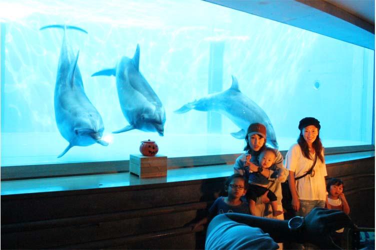イルカとパチリ2