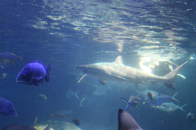 サメ給餌3