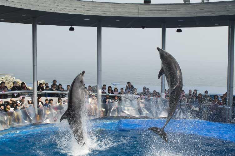 dolphin_PF