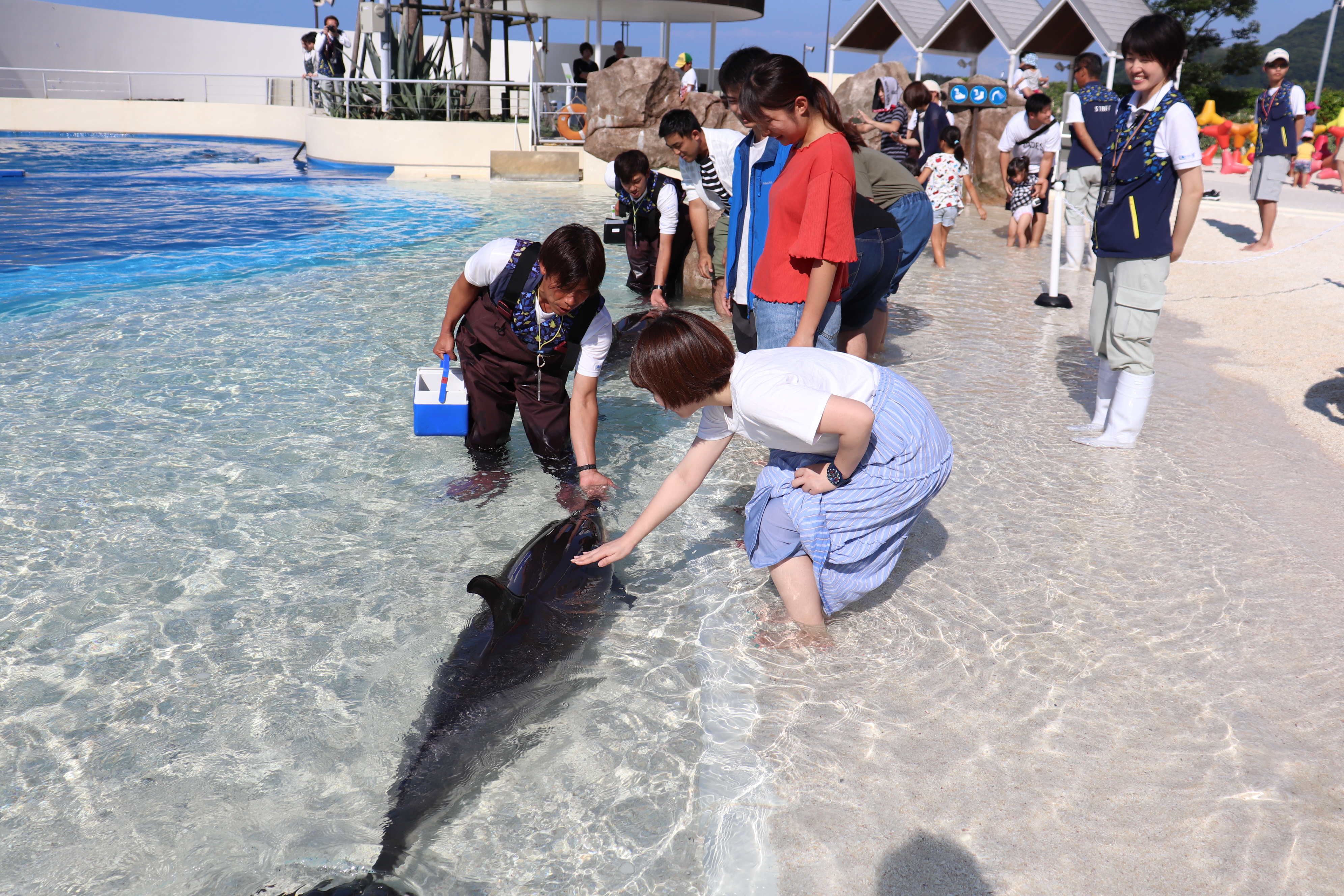 Dolphin_Contact
