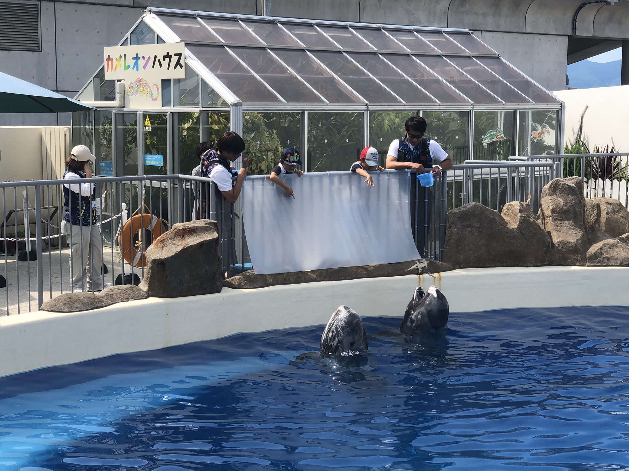 Whale_Feeding