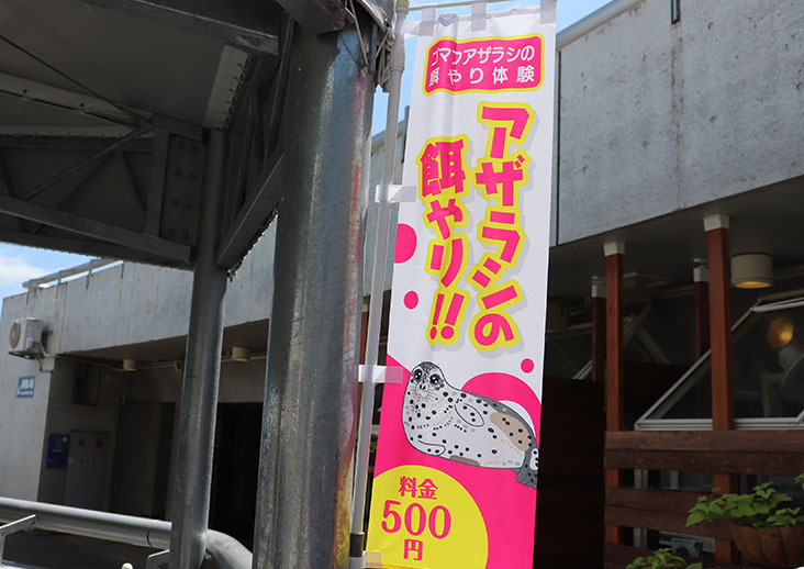 gomafuesayari12
