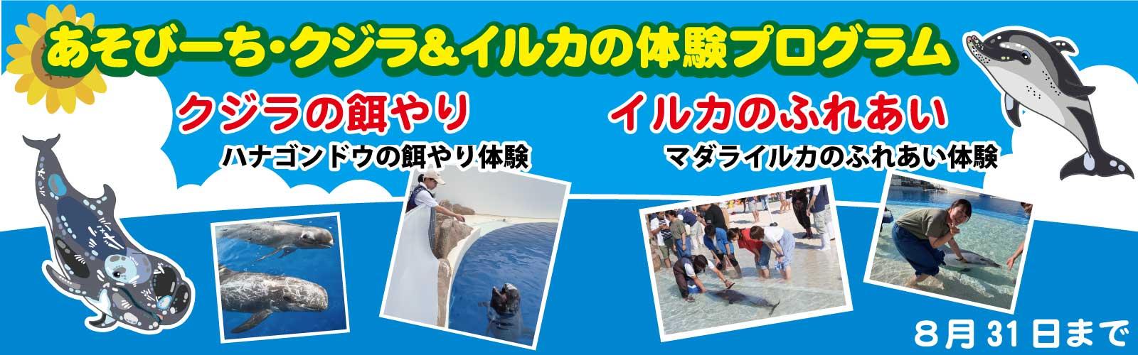 クジラ&イルカの体験プログラム