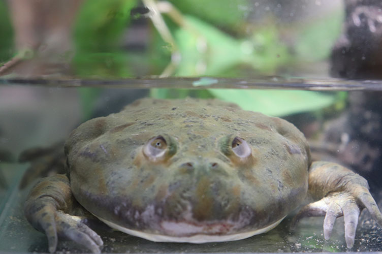 frog11